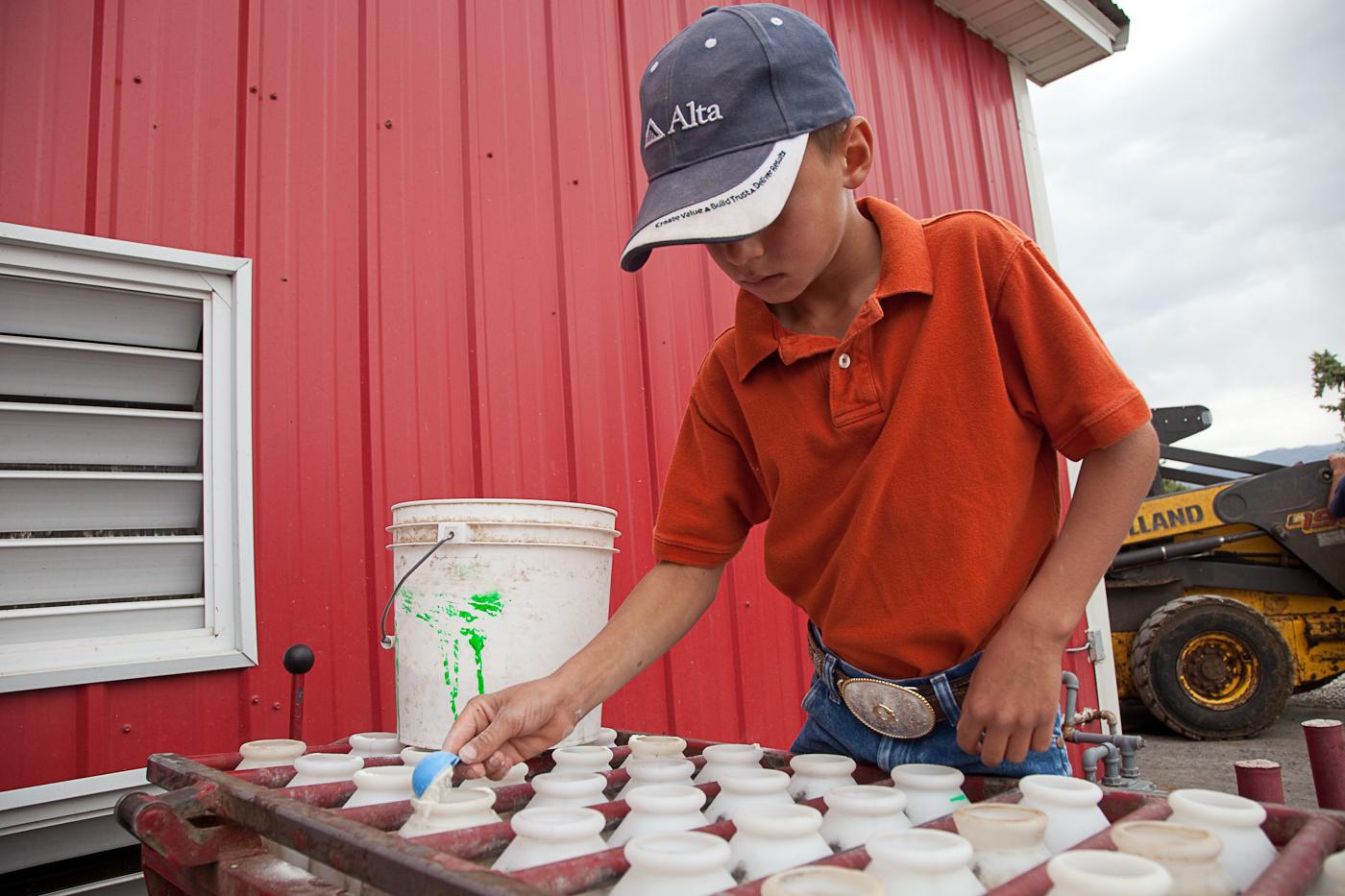 Measuring for calf bottles
