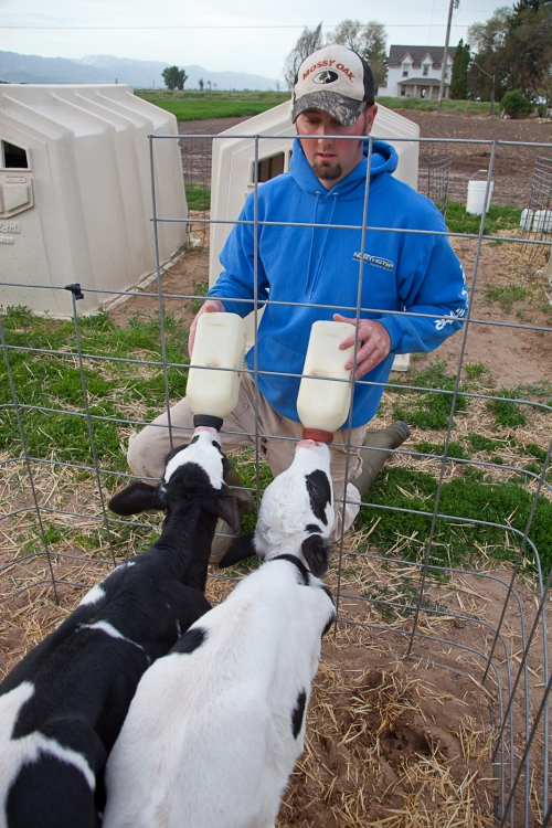 Cody Wiser feeding calves