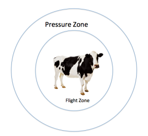Pressure v Flight Zone