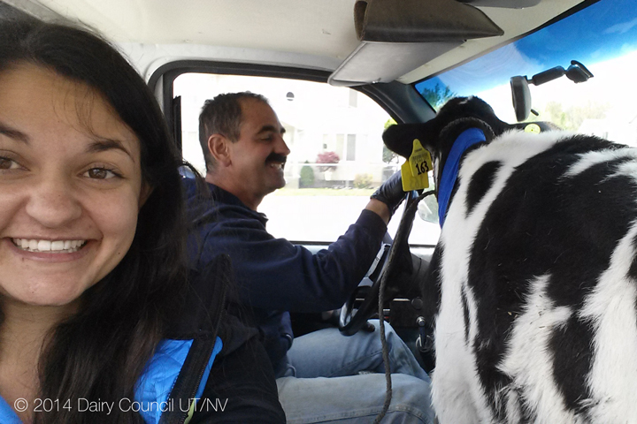 Our Calf In The Front Seat
