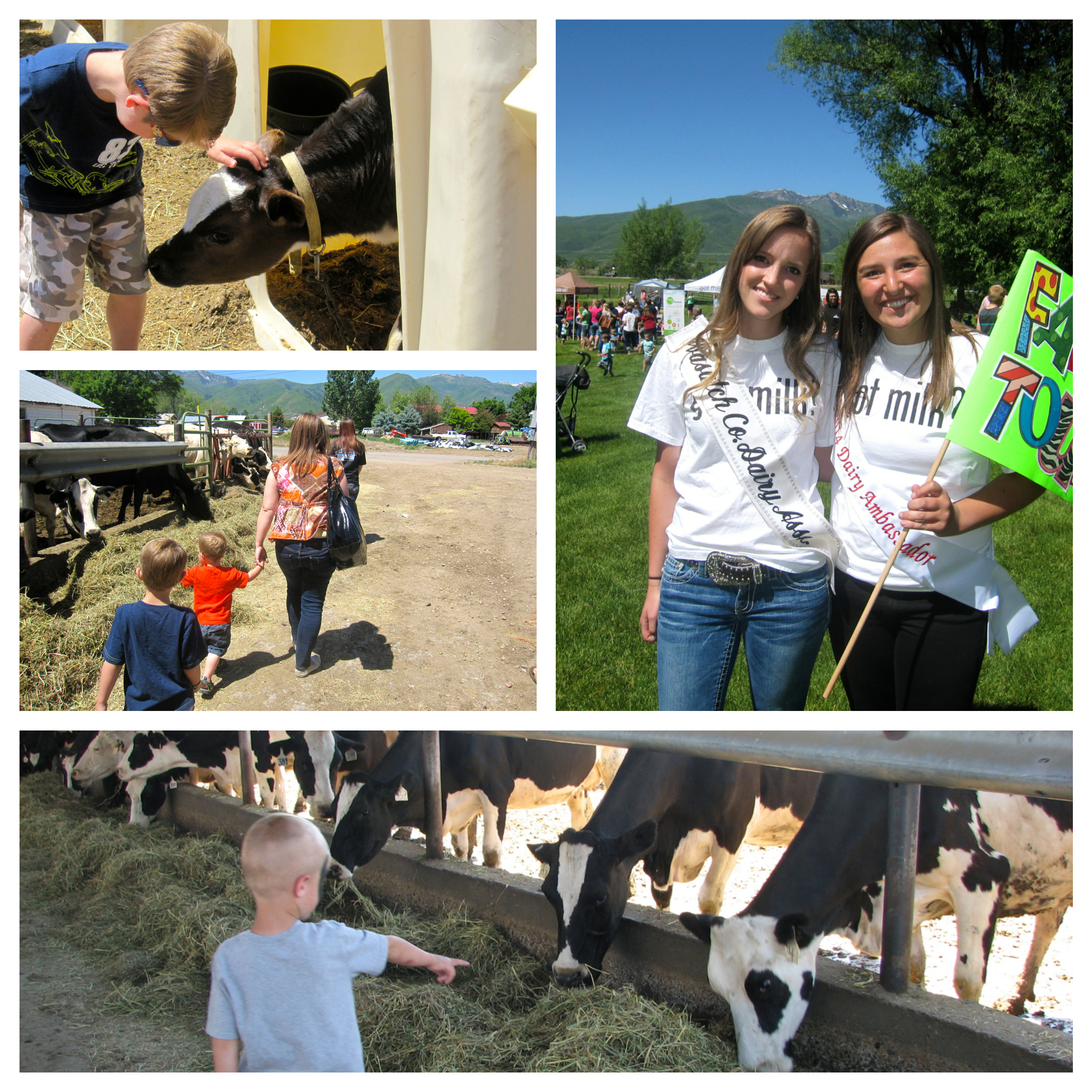 Farm Tour Collage