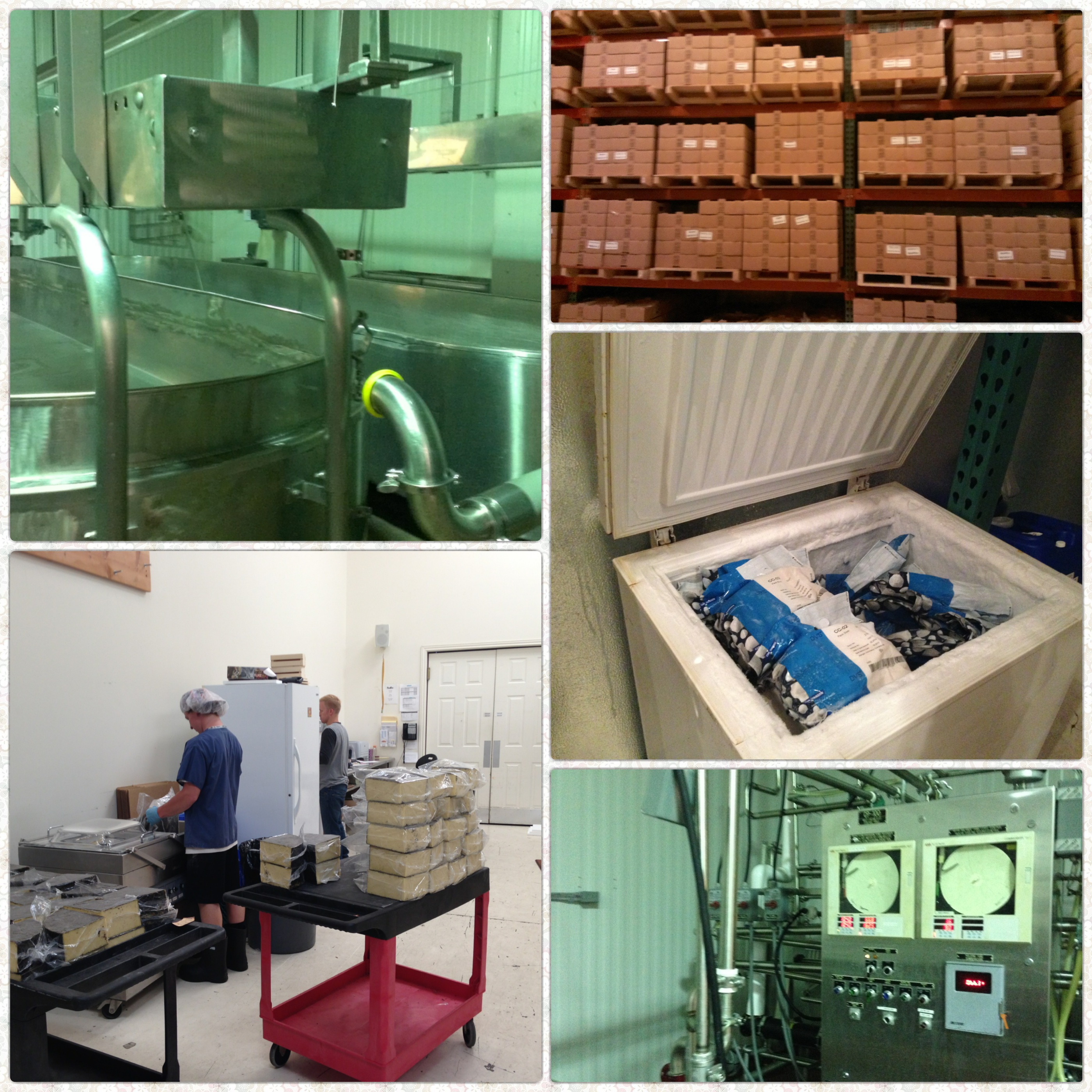 The Process: pasteurization, adding bacteria, making cheese curds, aging, and packaging.