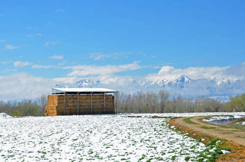 Late Season Snow - Hay Barn