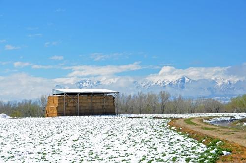 Late Season Snow - Hay Barn