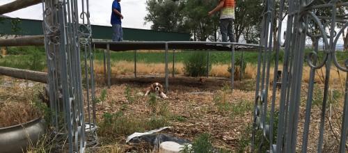jack under the trampoline